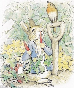 "Beatrix Potter's illustration for ""Peter Rabbit"""