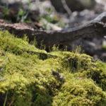 Making a Green Velvet Carpet of Moss