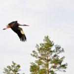 Lietuva 4: Stork-Spotting
