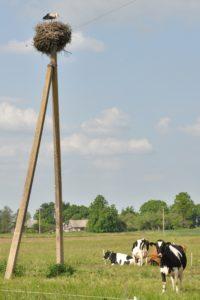farm friends near Alytus; photo by EBC, 20 May 2012