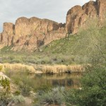 the Salt River near Saguaro Lake