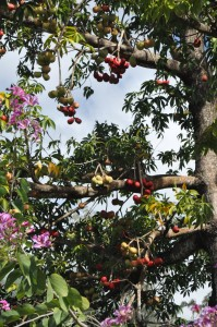 flowers and fruit in the Botanical Garden