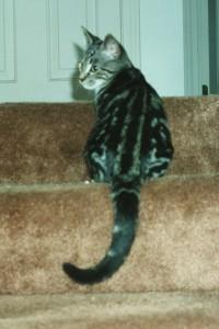 Theo, fall 1994