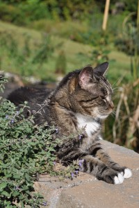 Theo by the catmint