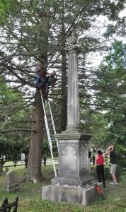 tree crew in hemlock