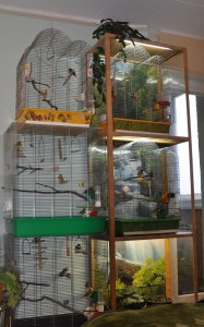 Diana's finches