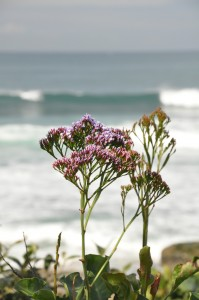 flower and surf